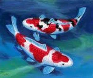 Ikan Koi si Primadona Dunia
